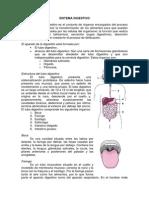 33 Sistema Digestivo