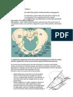 Anatomy Tut Wk 30 – Pelvis 1