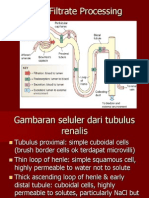 K-6 Tubular reabsorption and secretion GUS-K6.ppt