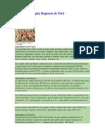 Agricultura Según Regiones de Perú-Agro