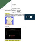 Protesis Fija (1)