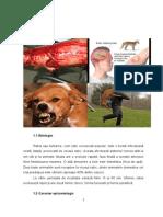 atestat veterinar