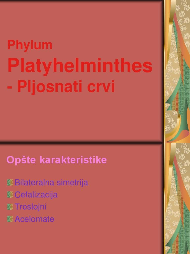 Nefridiopore platyhelminthes.