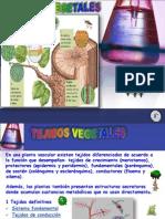 Tejidos-Vegetales