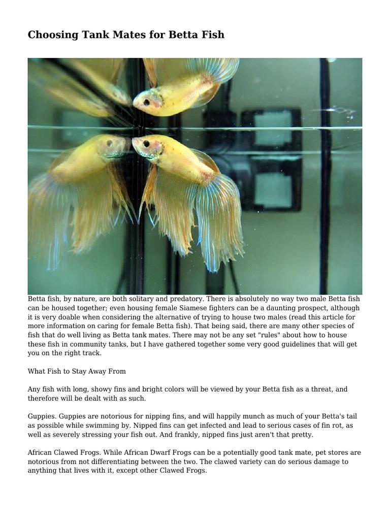 Choosing Tank Mates for Betta Fish | Aquarium | Fin
