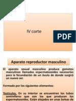 IV Corte Aparto Masculi