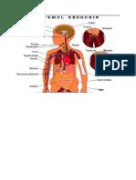 Imagini Anatomie - An I AMG