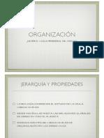 clase12nivelesdeorganizacion