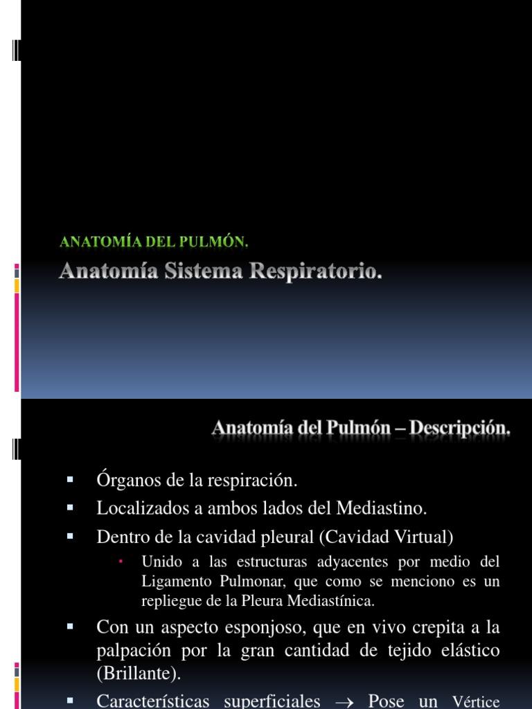 Anatomía Sistema Respiratorio IIP