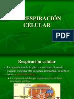RESPIRACI_NCELULAR
