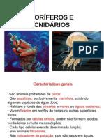 poriferos_cnidarios_2m