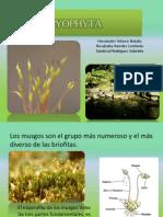 Fósiles Briophyta y Ginkgophyta