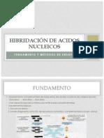 Hibridación de Acidos Nucleicos Viii