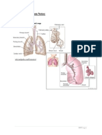 Animal Histology - Respiratory Notes