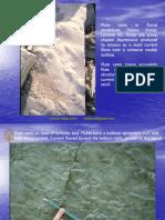 Estructuras Sedimentarias 2010 - I_C