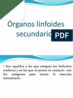 Órganos linfoides secundarios