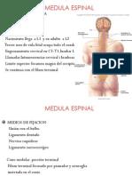 Med.espinal 13 II