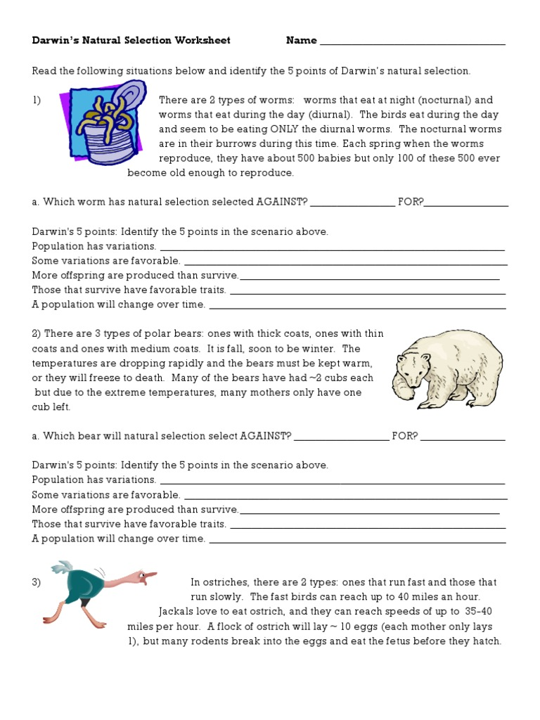 worksheet Natural Selection Worksheets worksheets natural selection worksheet pureluckrestaurant free darwins bears