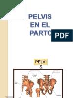 pelvis-110329125817-phpapp01