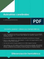 CLASE 2 Asimetrías Cerebrales