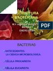 e Structur a Bacterian A