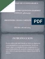 MATEMATICAS.pptx