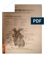 PART ONE- Cardiovascular System Exercises[Smallpdf.com]