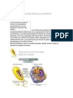 Características de Las Células Procarióticas
