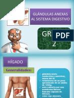 Glándulas Anexas Al Sistema Digestivo