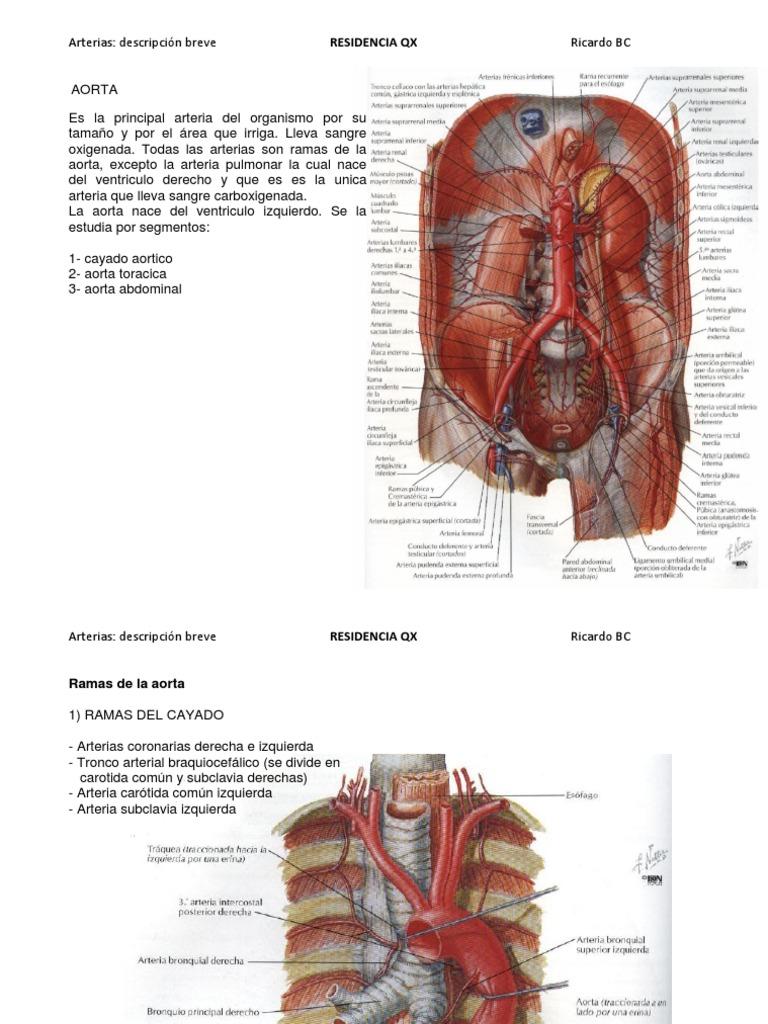 Encantador Anatomía Hembra Inferior Izquierda Del Abdomen Fotos ...