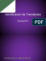 #11 Identificacion de trematodes.pptx