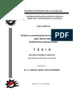 SINTESISYCARACterizacion plata.pdf