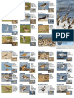 Ct Shore Birds