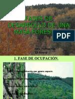 Fases de Desarrollo de Una Masa Forestal
