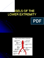 Vessels of the Lower Extremity