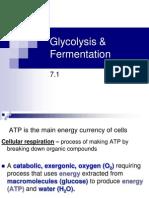 7 Glycolysis - Fermentation - Krebs Revised