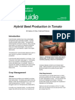 Hybrid Seed Production of Tomato
