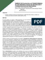 Análisis Del Dna Plásmídico de Escherichia Coli Transformada Mediante Digestión Con