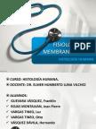 4B Macrófagos - Seminario 1 Fisiología de La Membrana Celular