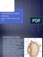 Transduccion Visual