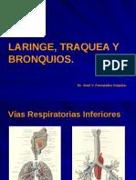Laringe, Traquea y Bronquios.pptx