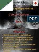 Coluna Vertebral e Bacia - Anatomofisiologia Humana I.ppt