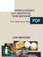hongos2 TEMA PRESENTACION PPT