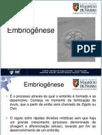 Embriogenese Nassau