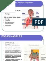 Anatomarespiratoria 100318235727 Phpapp01 (1)