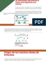 Linfocitos T y Los Anticuerpos Del Linfocito B