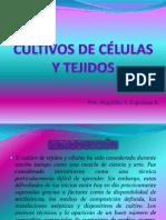 cultivosdeclulasytejidos-100727214651-phpapp01