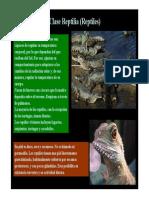 9ReptilesAves.pdf
