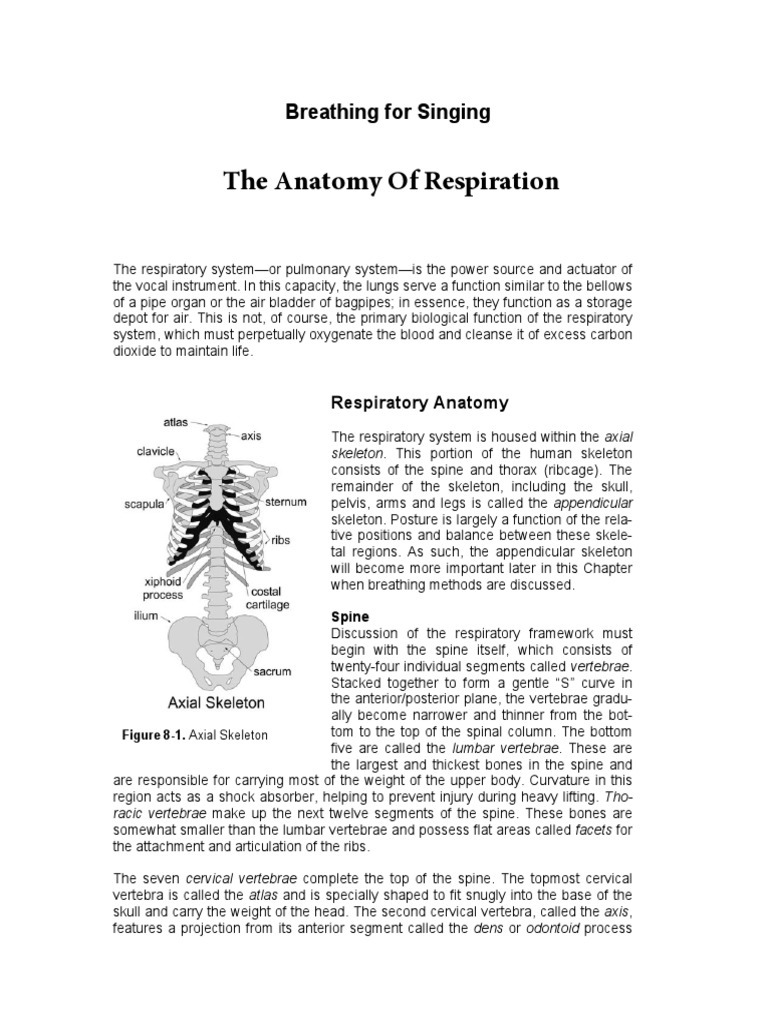 Breathing for Singing-The Anatomy of Respiration | Vertebra | Abdomen