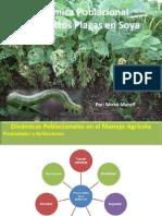 Dinamica Poblacional de Insectos Plagas